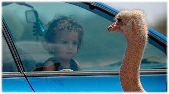 ребенок в машине спереди